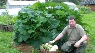 Выращивание кабачков, цуккини и патиссонов хитрым способом(, 2013-07-30T11:49:23.000Z)