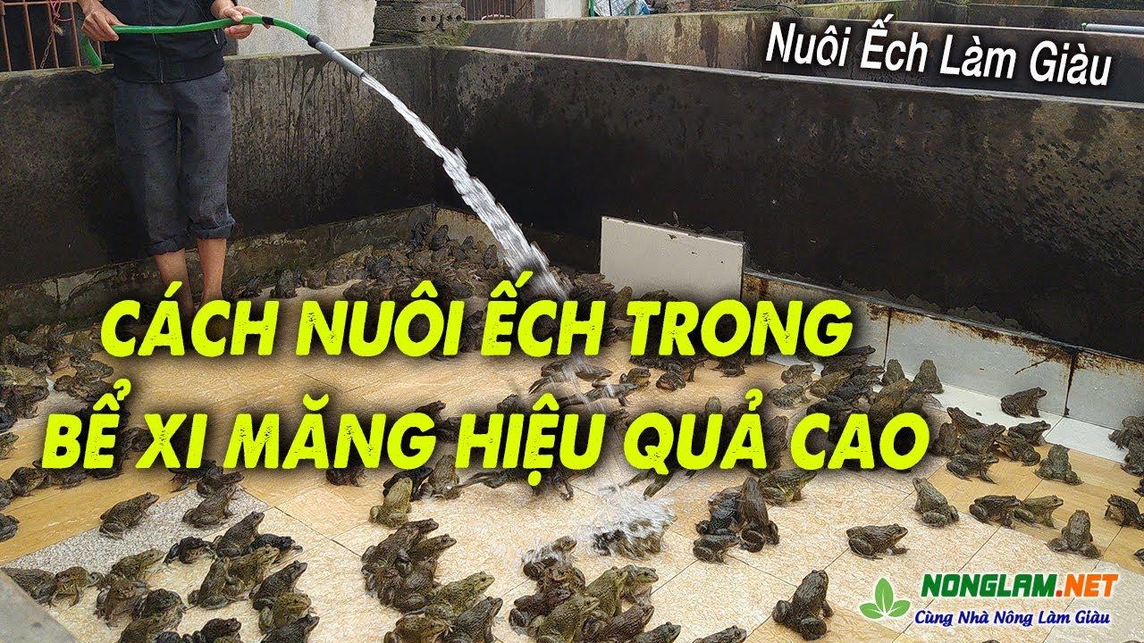 Kỹ Thuật Nuôi Ếch trong Bể Xi Măng Hiệu Quả Cao   Nuôi Ếch Thương Phẩm