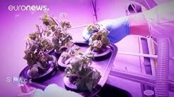 ESA Euronews: Tomatenzucht im Weltall