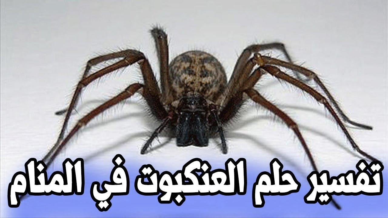 العنكبوت في المنام موقع محتويات