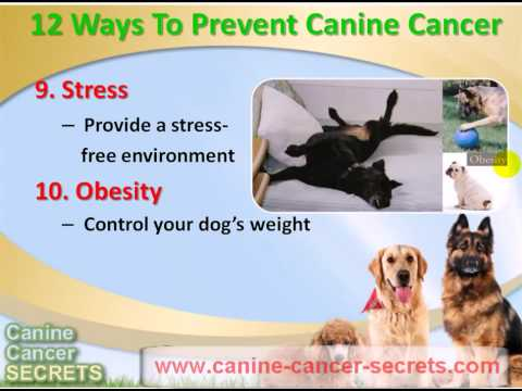 12 Easy Way To Prevent Canine Cancer In Your Dog