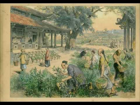 Tea Music - Camellia Sinensis