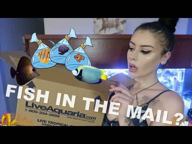 I Tried Ordering Live Fish in the Mail