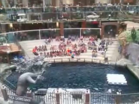 West Edmonton Mall Shopping Center Sea Lion Show Aquapark Аквапарк Эдмонтон Канада