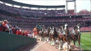 Alex meets the famous Budweiser Clydesdales as part of World Wish Day on April 29, 2011