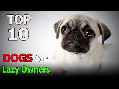 Top 10 dogs for Lazy Owners | Top 10 animals