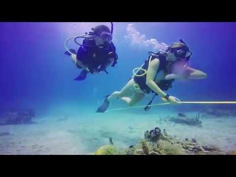 Broadreach Marine Science Programs