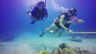 Video Broadreach Marine Science Programs download MP3, 3GP, MP4, WEBM, AVI, FLV Oktober 2018