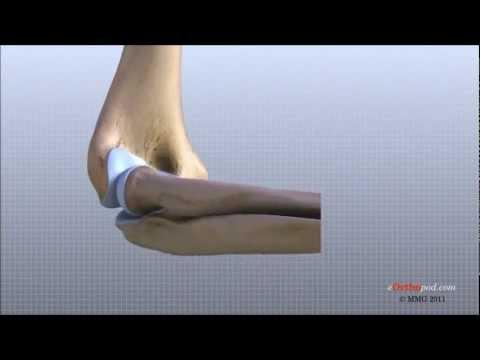 Anatomía de la articulación del codo. - YouTube