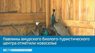 Павлины амурского биолого-туристического центра отметили новоселье