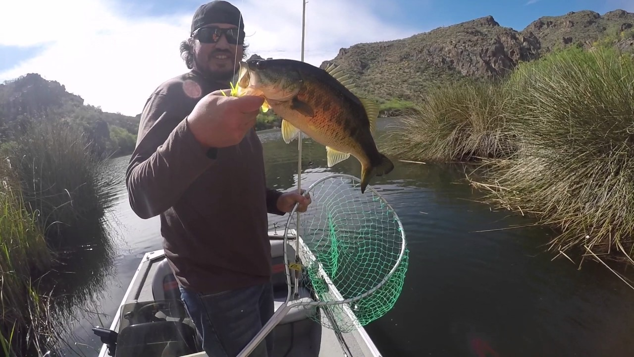 Az bass fishing beds texas rigging saguaro lake 3 28 17 for Saguaro lake fishing