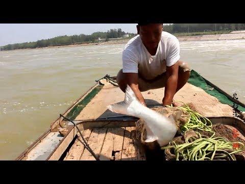 大閘關水,大魚竟把網拖走,大家帶好鋪蓋,等萬人搶魚大場面!【農村漁夫黎明】