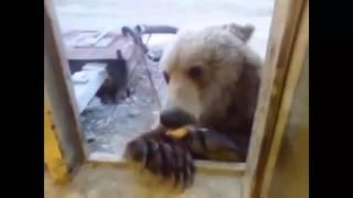 ЛУЧШИЕ Русские приколы 2015   Смешные животные   Смешное 2015   Видео приколы 2015