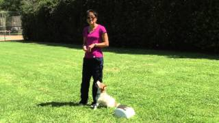 Treat And Train Obedience - Heeling Exercise | Drsophiayin.com