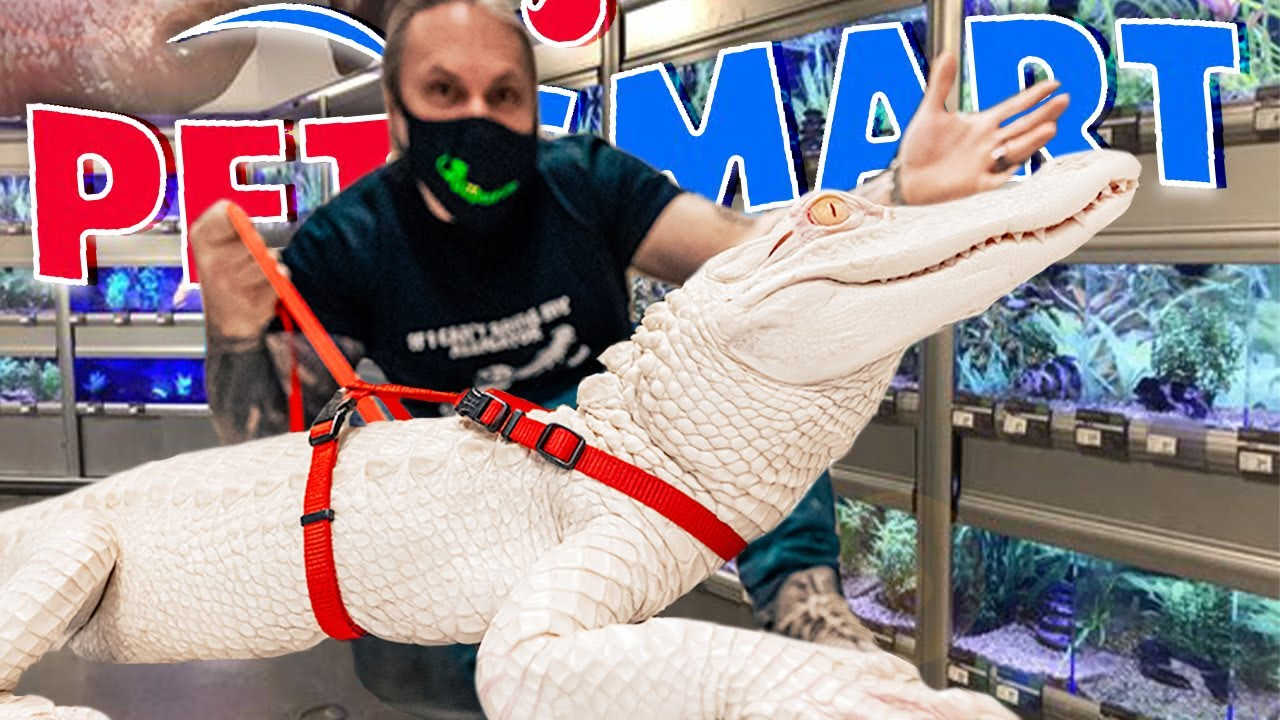 Download TAKING MY ALBINO ALLIGATOR TO PETSMART TO PICK OUT AN OUTFIT!!   BRIAN BARCZYK