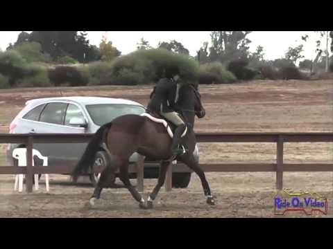 196S Elizabeth Meehan JR Intro Beginner Novice Stadium Jumping Ram Tap Nov 2012