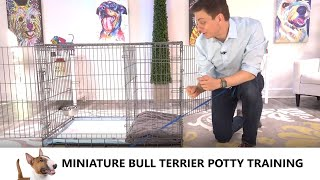 Miniature Bull Terrier Potty Training from WorldFamous Dog Trainer Zak George  Bull Terrier Puppy