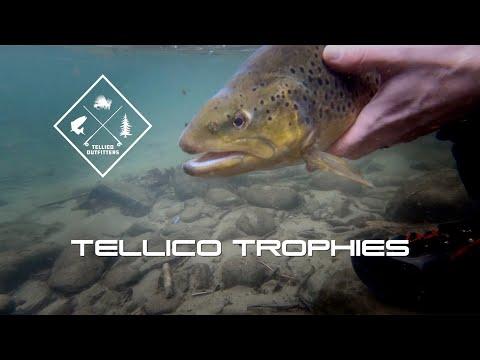 Tellico Trophies