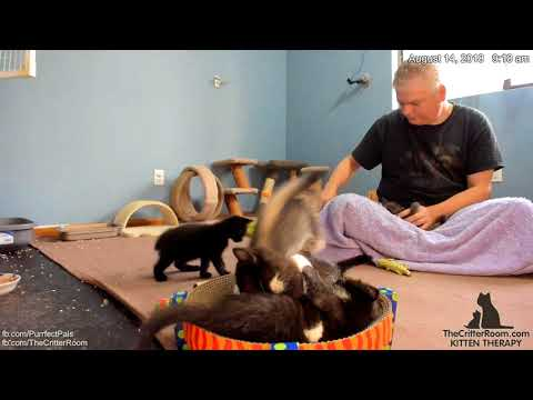 Five Guys Kittens - Morning 2018-08-14