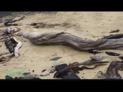 Real Mermaids Found Dead On Beach True Real Story - YouTube