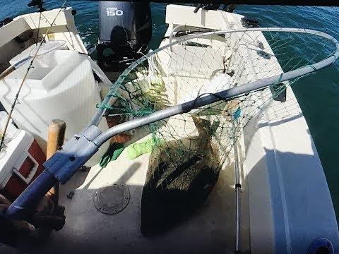 Rock Cod/Halibut Fishing| Santa Cruz,Capitola