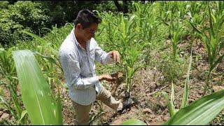 NASA Satellites Help Farmers in Central America's Dry Corridor