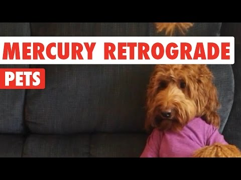 Mercury Retrograde Pets Video Compilation 2016