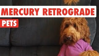 Mercury Retrograde Pets Video Compilation 2016