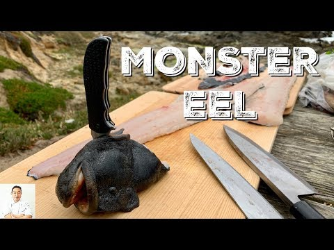 MONSTER EEL | Catch and Cook | Was It Still Alive During Filleting?