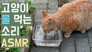 고양이 버찌 물 먹는 소리 ASMR / 째폴보&프렌즈 숏튜브