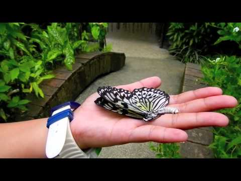 Butterfly Farm - Bohol Tours - WOW Philippines Travel Agency