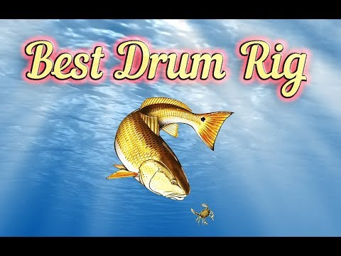 Best Redfish And Black Drum Rig