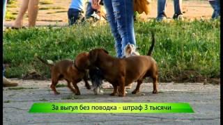 """Новый закон про выгул собак и шумных соседей ИК """"Город"""" 25.09.2014"""