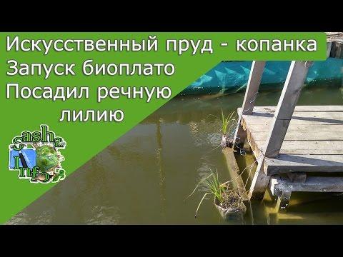 Растения для водоема (фото) водные и болотные