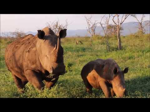 Thanda Safari KwaZulu-Natal - Amazing Animal Encounters