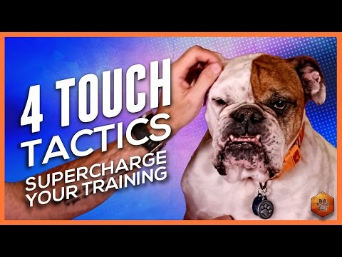 How to Pet Your Dog - 4 Touch Tactics to Supercharge Training