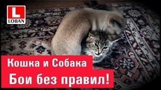 Кошка и Собака.    Бои без правил))))