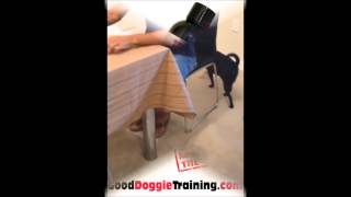 Breaking Bad Behaviors In Dogs   No Begging At The Table