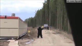 Нападение медведя г.Сургут