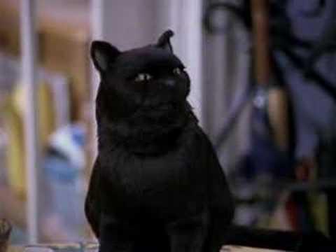 Salem Saberhagen The Cutest Cat Ever Youtube