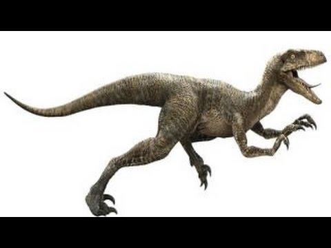 Velociraptor Un Ladron Rapido Y Feroz Dinosaurios Velociraptor belonged to a group of dinosaurs called dromaeosaurs. velociraptor un ladron rapido y feroz