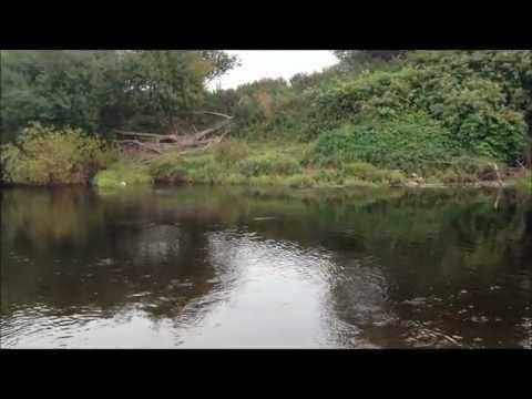 Personal Best Salmon - Welsh Dee