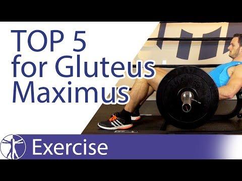Top 5 Gluteus Maximus Exercises
