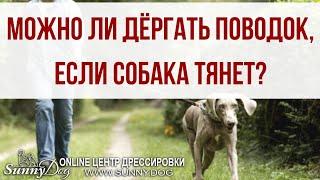 Можно ли дергать поводок, если собака очень тянет? Работает ли этот метод?