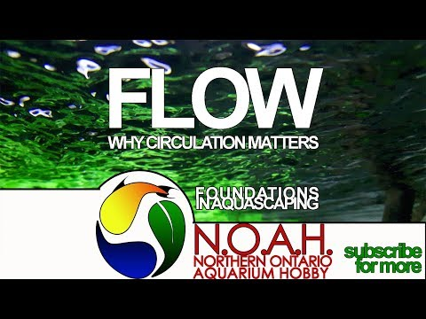 Aquarium Flow 🌿 Why Water Circulation Matters🌿 Foundations in Aquascaping