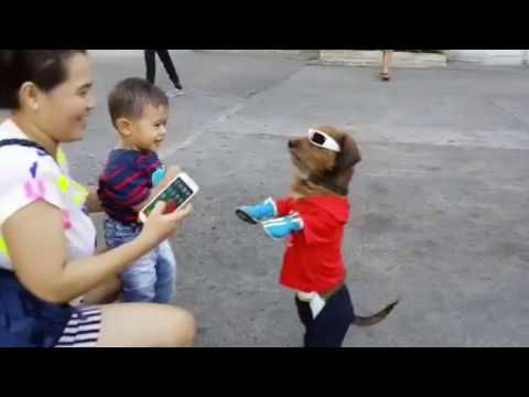 Dogs Walking Like Humans In Super Hero Costumes. WOW!