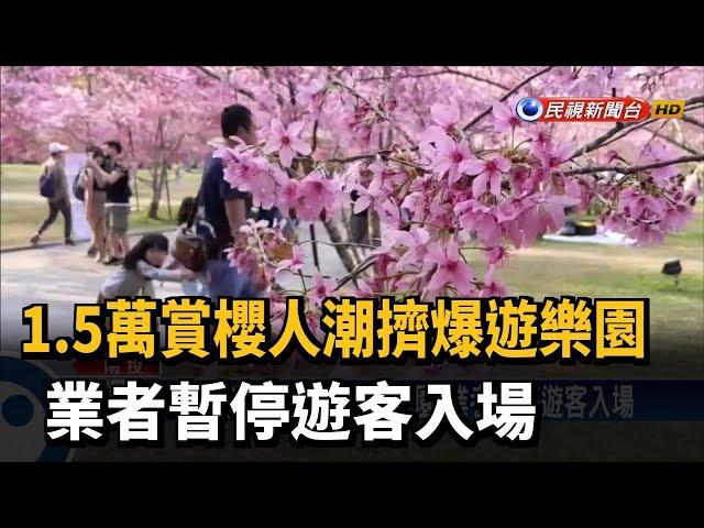 1.5萬賞櫻人潮擠爆遊樂園 業者暫停遊客入場-民視新聞