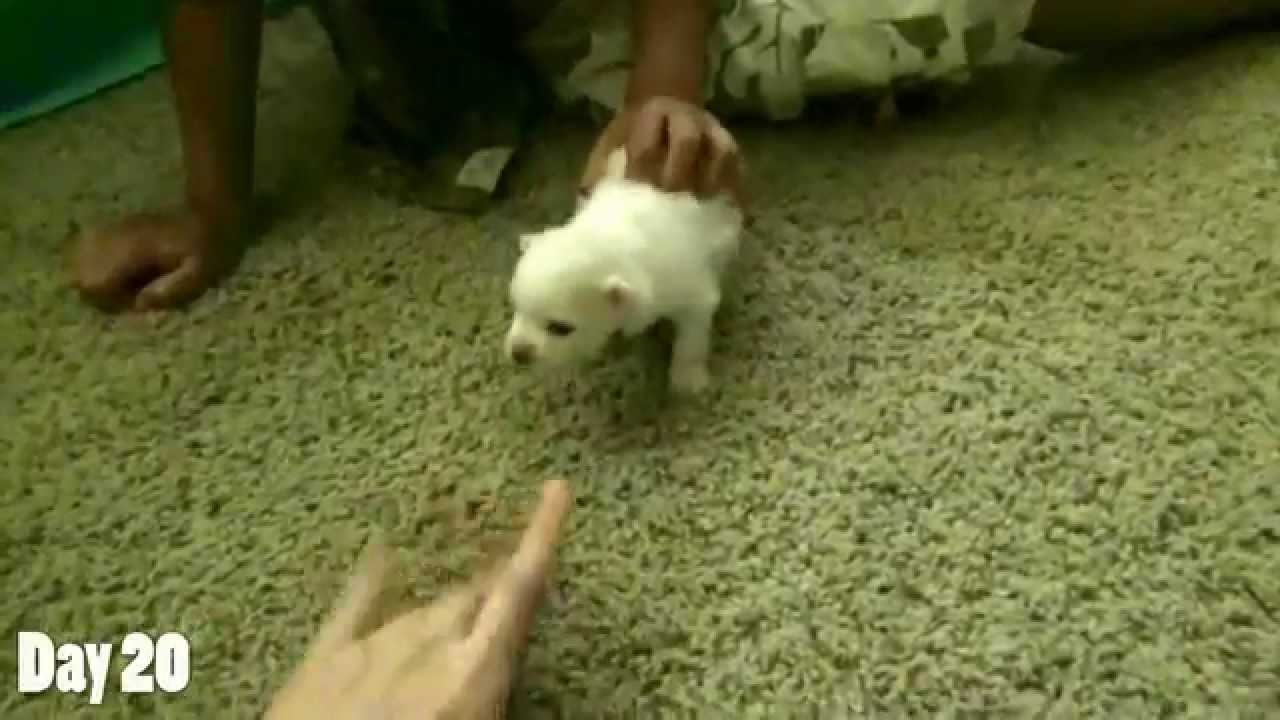 how to make pom pom puppies without kit