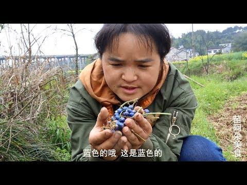 苗大姐田坎找野木耳,看到果子直接吃,蓝色的珠珠叫什么