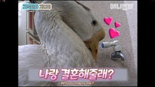 gotta learn whats legit small wedding is from a goose couple